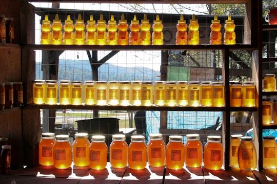 023_ga mountain honey-.jpg