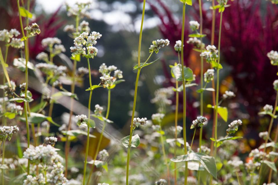 KB_wildflowers-4808.jpg
