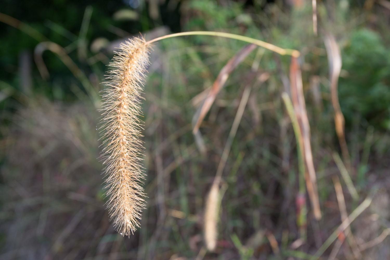 early wutumn grass-2502.jpg