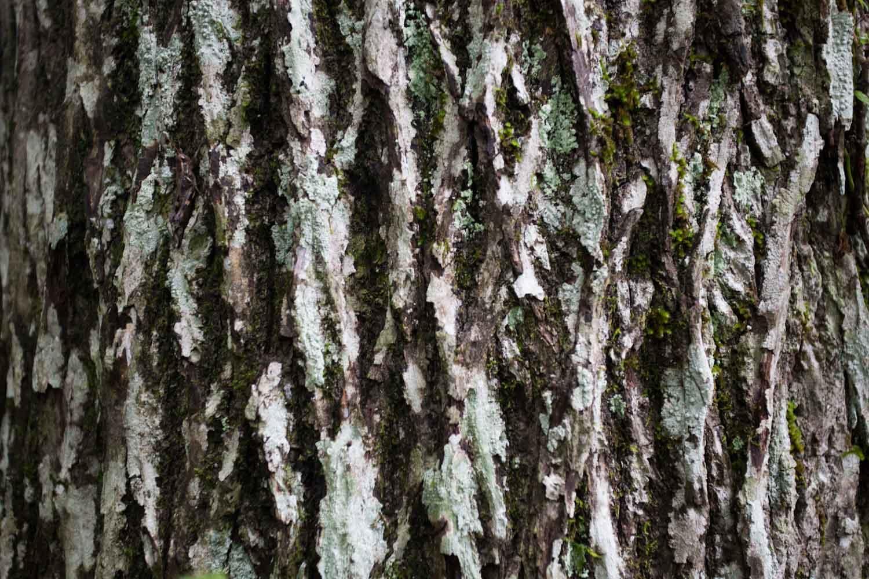 tate_tree_bark-2322.jpg