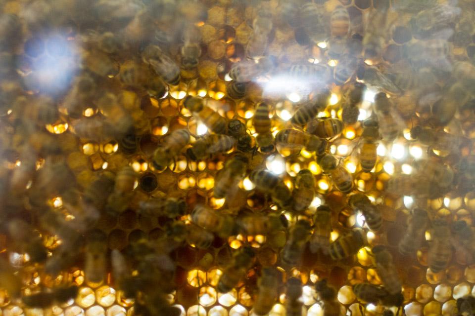 KB_bees-0212.jpg