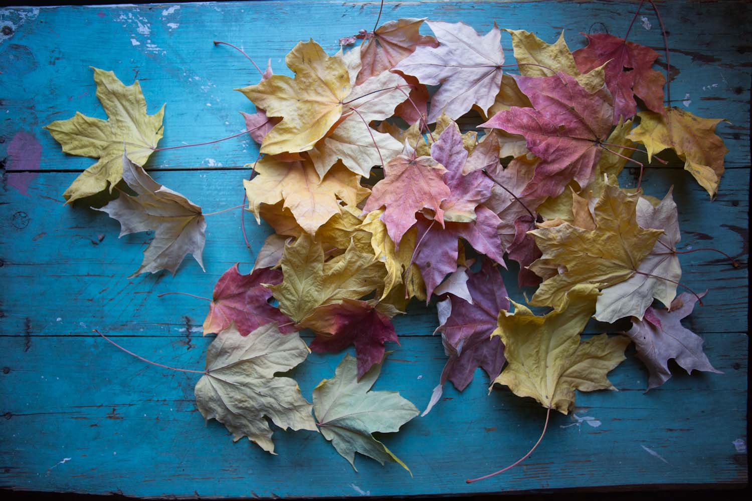 leaf beauty-4791.jpg