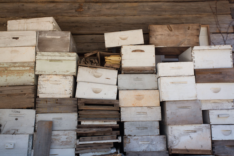bee boxes-3932.jpg