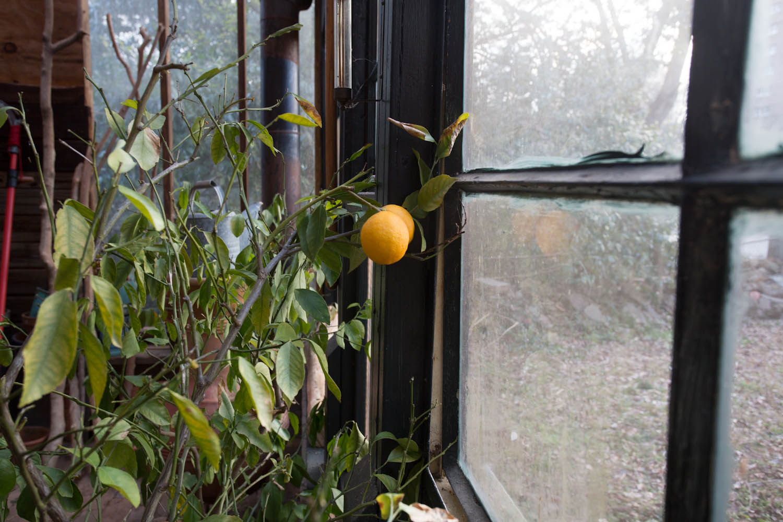 lees_homemade_greenhouse-6402.jpg