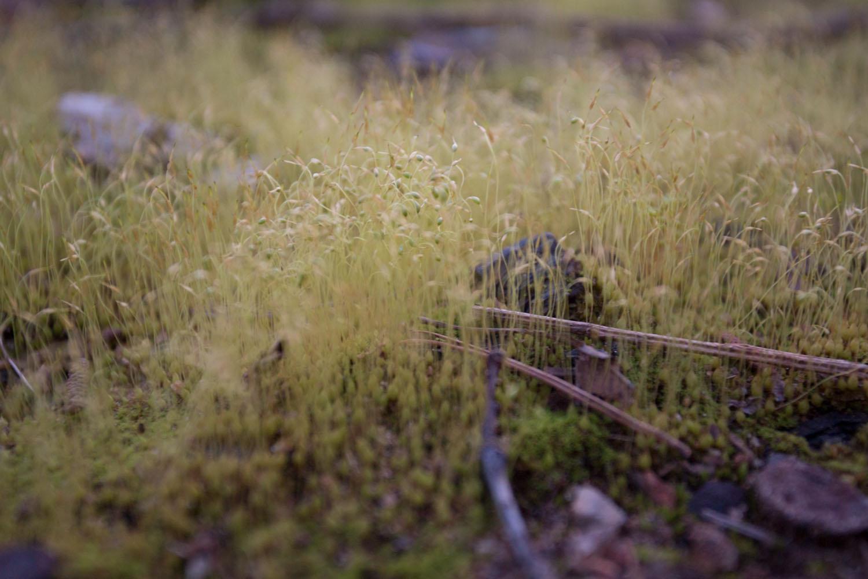 mossy-0931.jpg