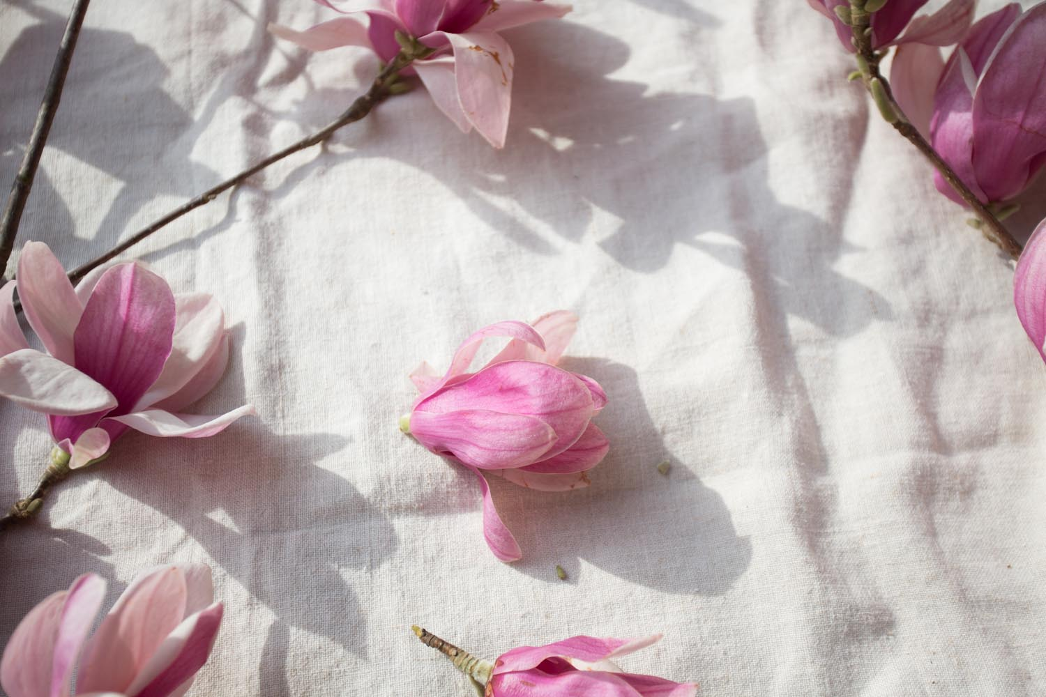 japanese magnolia, waiting-1133.jpg