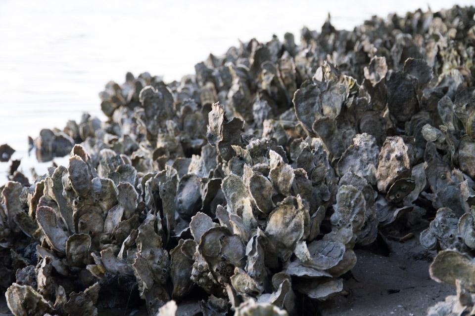 KB_oysters-6400.jpg