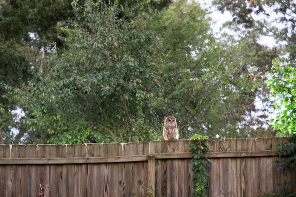 KB_owls-4614.jpg