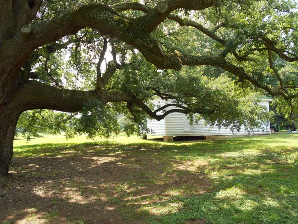 RW_redcliffe-plantation-4084.JPG