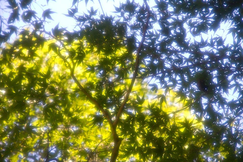 KB_greens-5596.jpg
