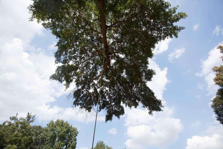 tree_swing_by_tracks-3265.jpg