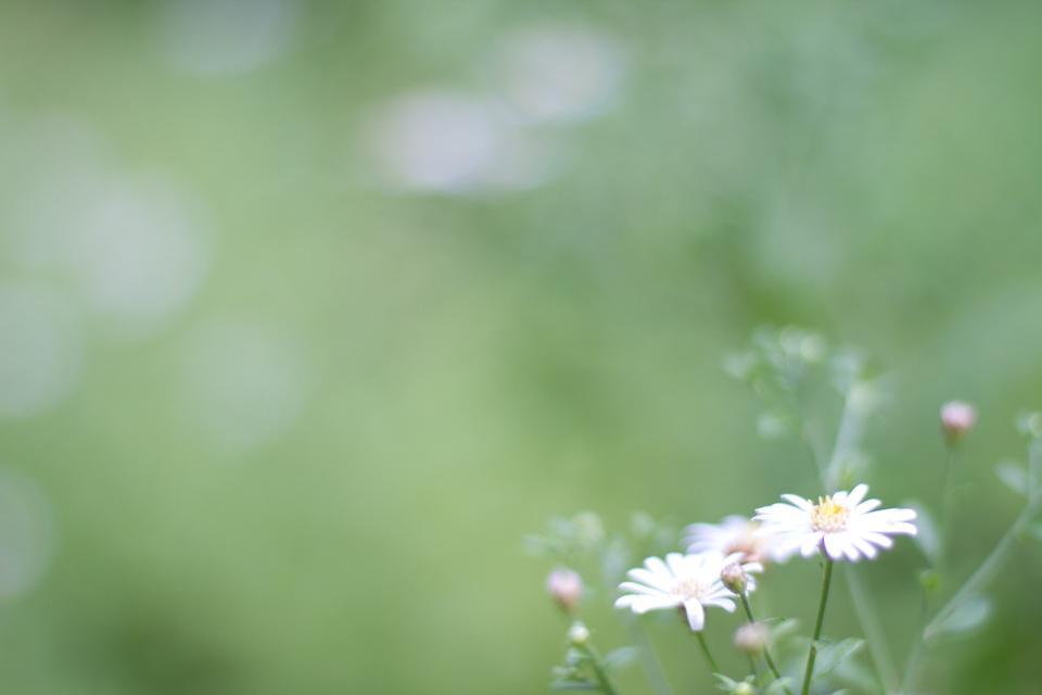 KB_Summer.white.blooms-2389.jpg