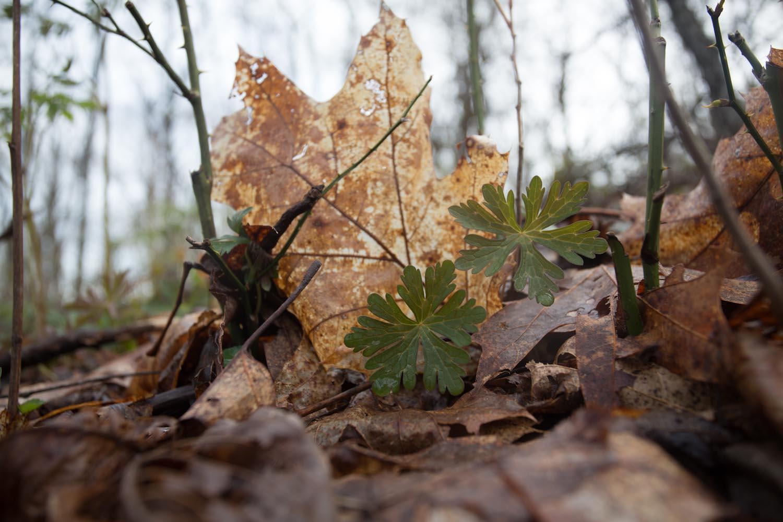 woodland spring-7036.jpg