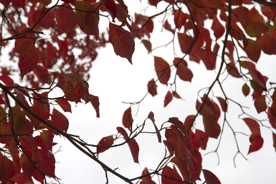 KB_reddogwoods-6021.jpg