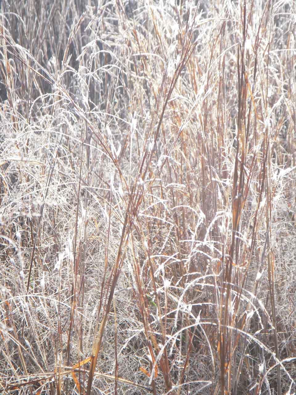 RW_winterlights-0627.jpg