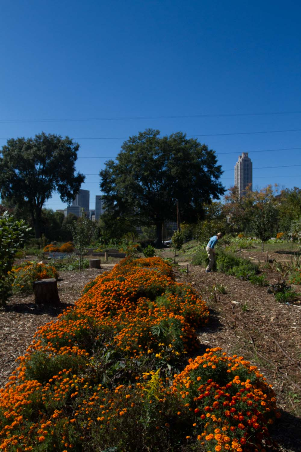 truly_living_well_farm_atlanta-6045.jpg