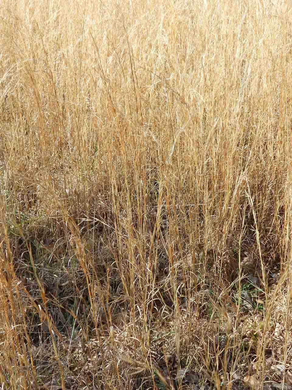 RW_glintinggrass-0454.JPG