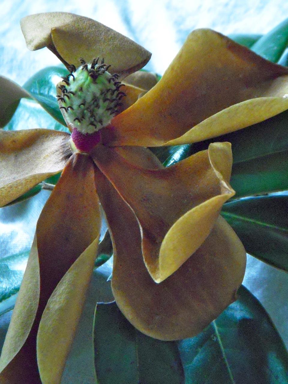RW_magnolias-8039.jpg
