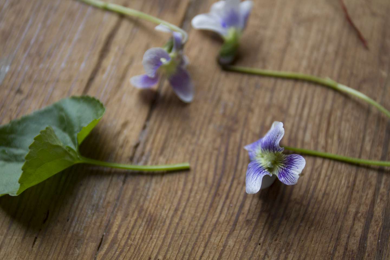 violet posey-3605.jpg