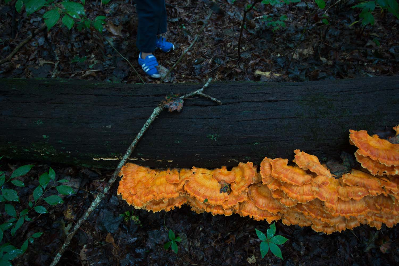 tate_mushrooms-2176.jpg