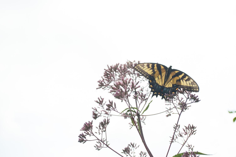 tate_butterfly-2079.jpg