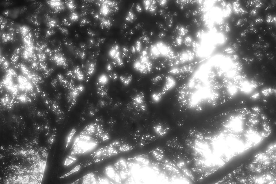 KB_light-5594.jpg