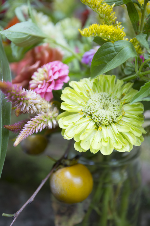zinnias and fall color-7139.jpg