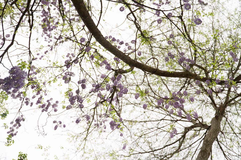 KB_wisteria-6889.jpg