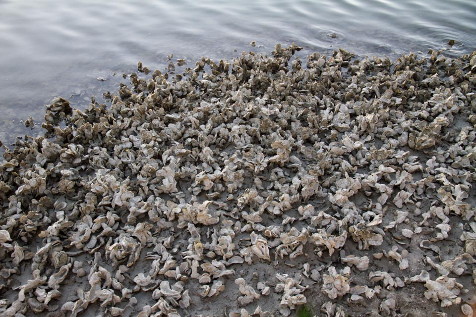 KB_oysters-6398.jpg