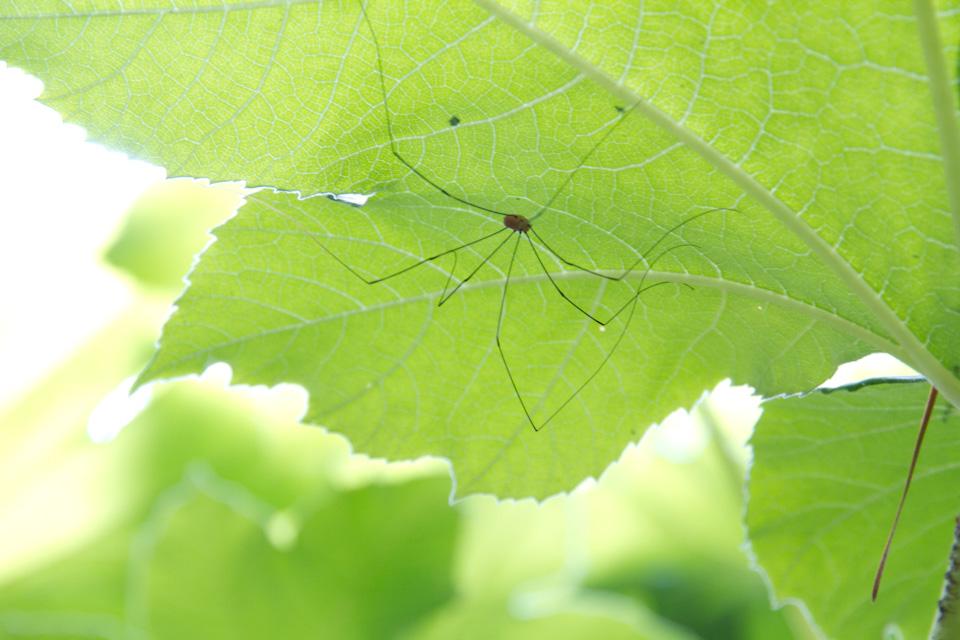 KB_spider-3635.jpg