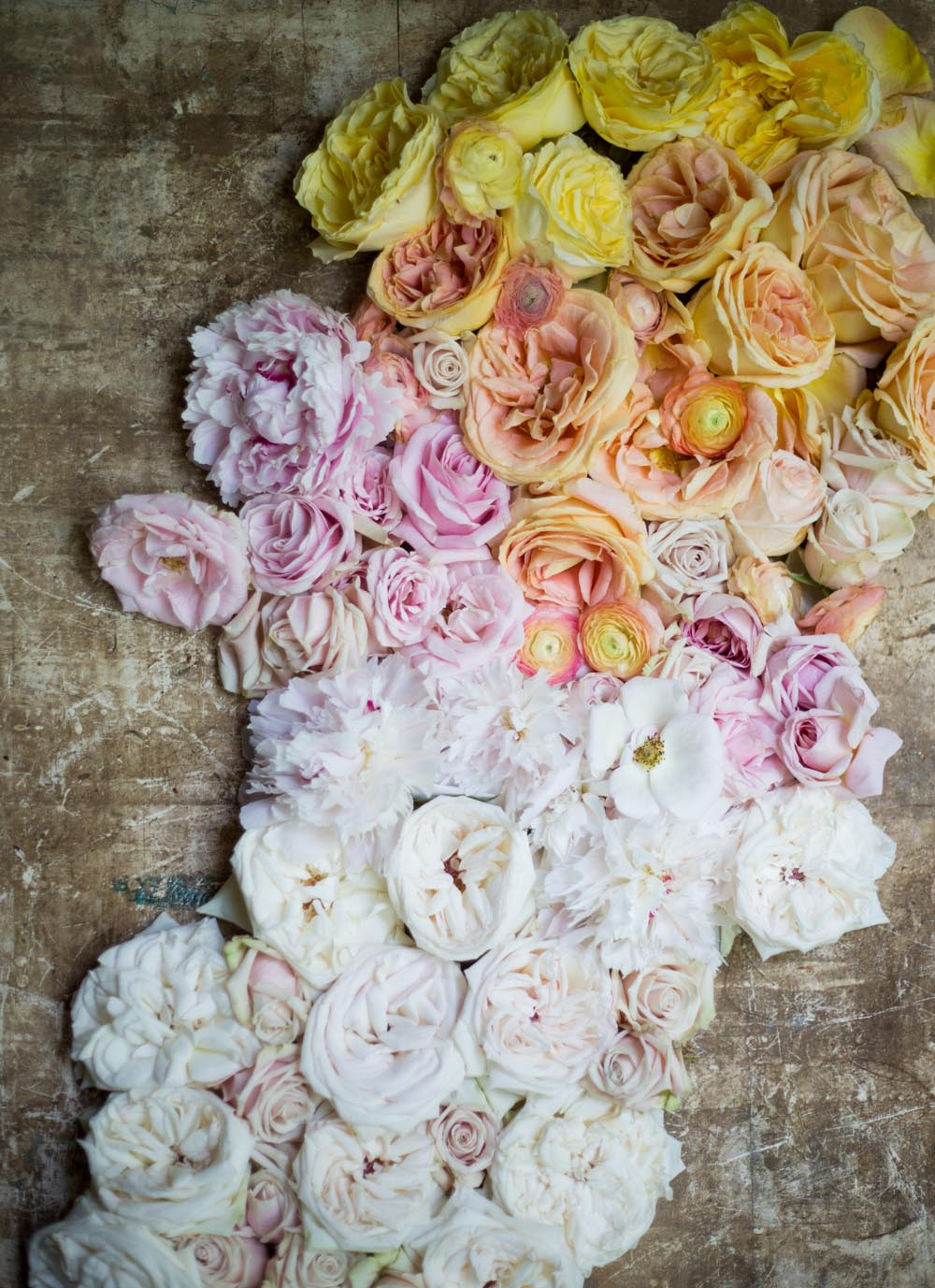 ombre_roses-9255.jpg