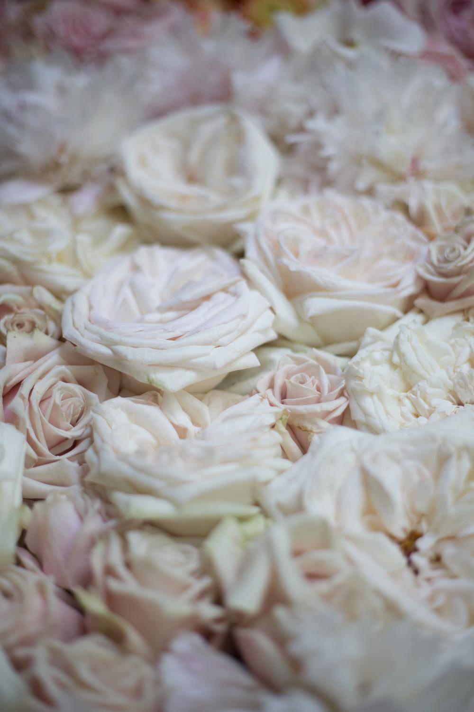 ombre_roses-9259.jpg