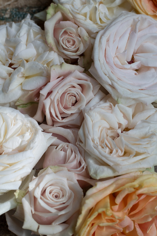 ombre_roses-9239.jpg