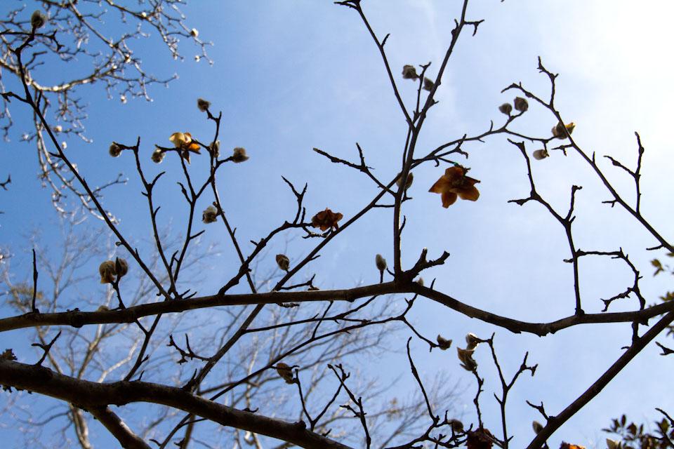 KB_magnolialove-18.jpg
