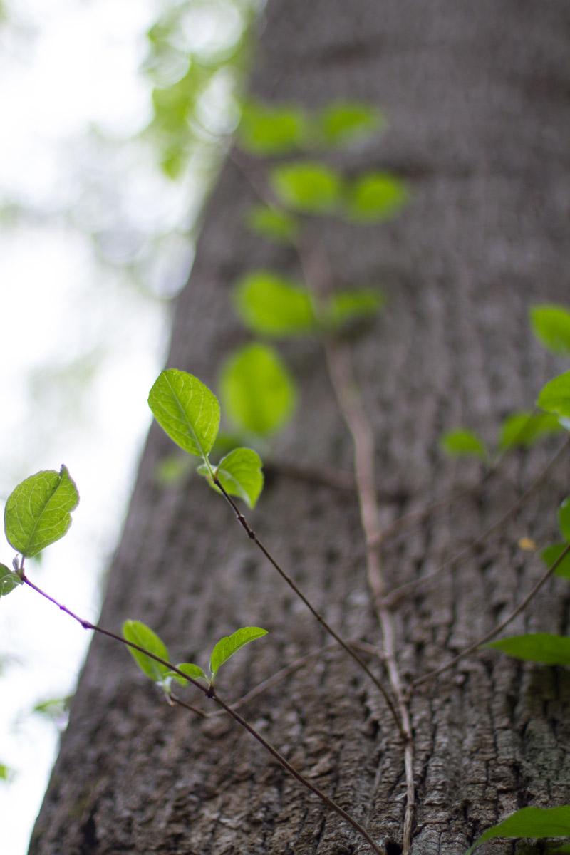 KB_greenpoppingthrough-0152.jpg