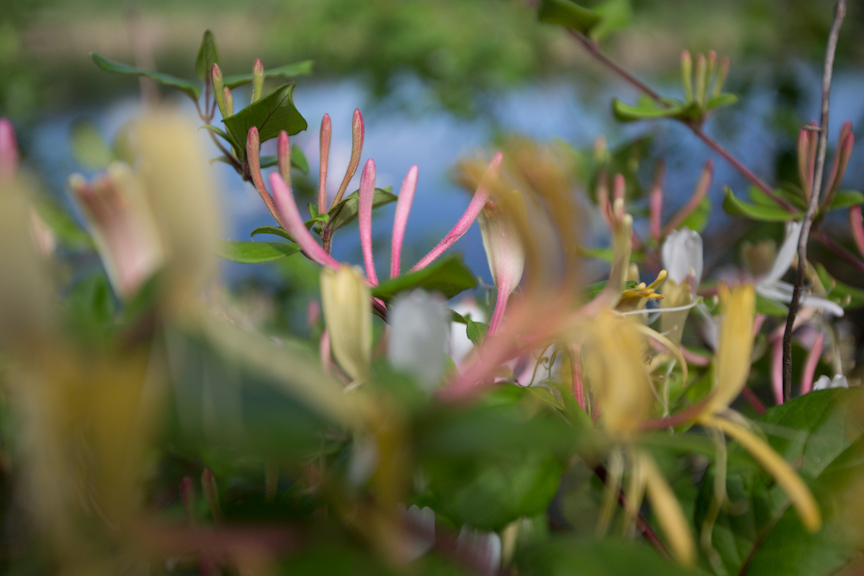 pink and green-9204.jpg