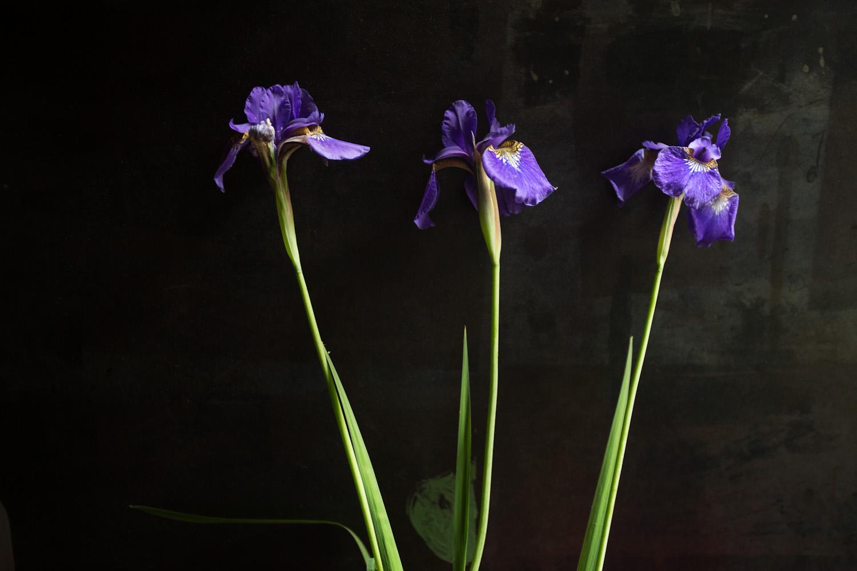iris-9791.jpg