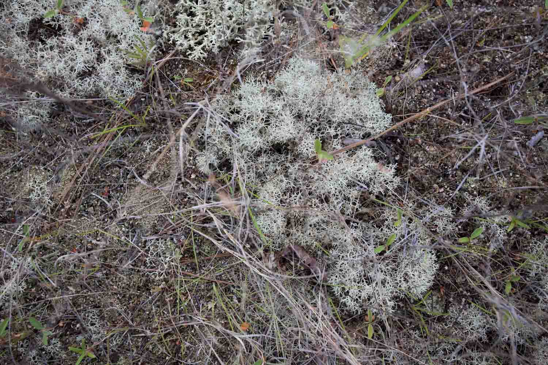 lichen and moss-0034.jpg