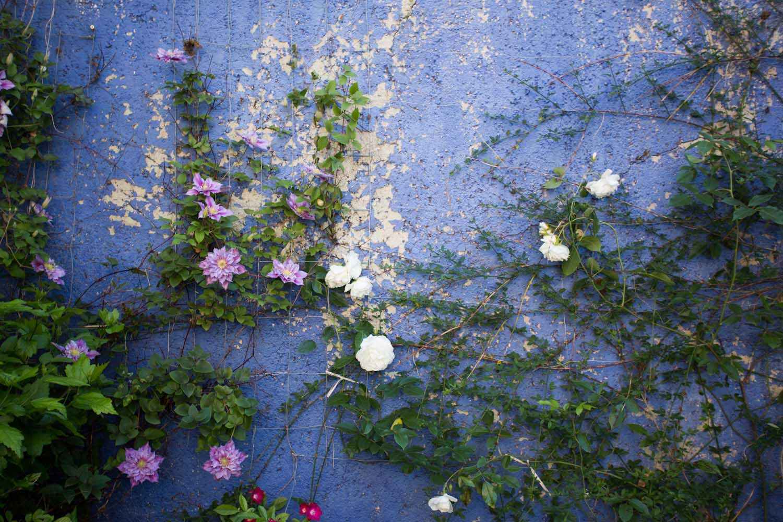 france, seasonal blooms-2325.jpg