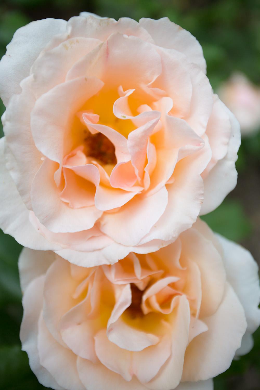 france, seasonal blooms-2556.jpg