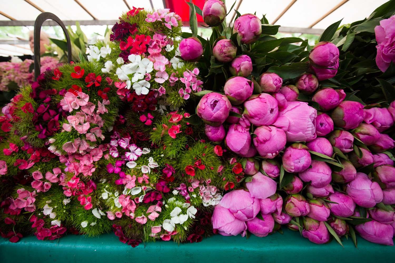 france, seasonal blooms-2521.jpg