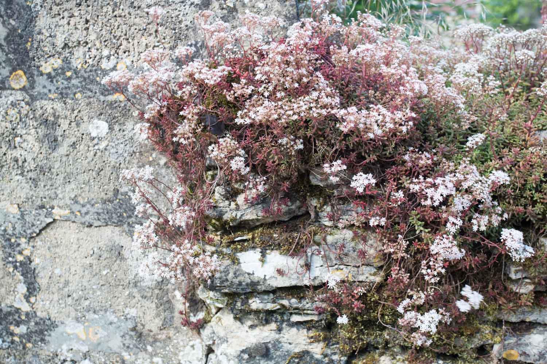 france, seasonal blooms-2161.jpg