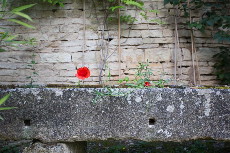france_seasonal blooms-1522.jpg