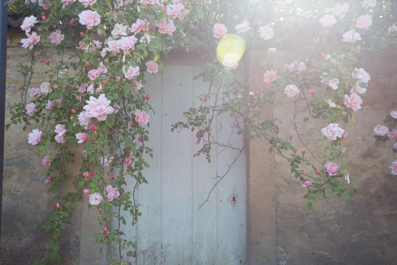 france, seasonal blooms-2168.jpg