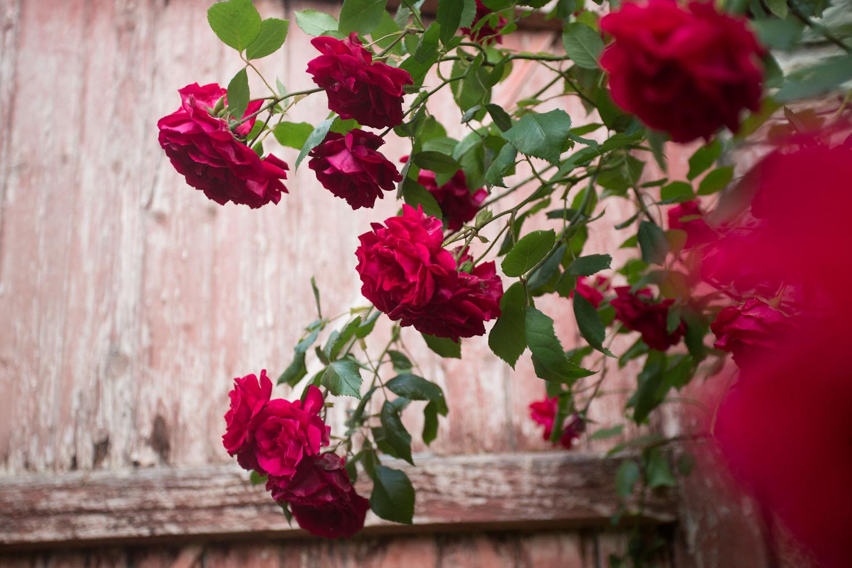 france_seasonal bloom-1507.jpg