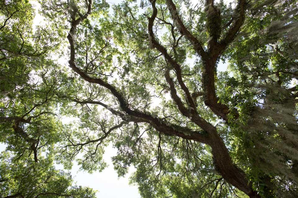 KB_dearhead-oak-9014.jpg