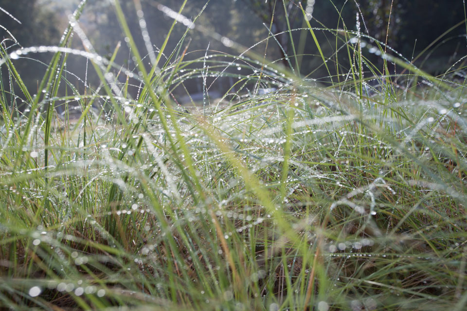 KB_dew+grass-3402.jpg