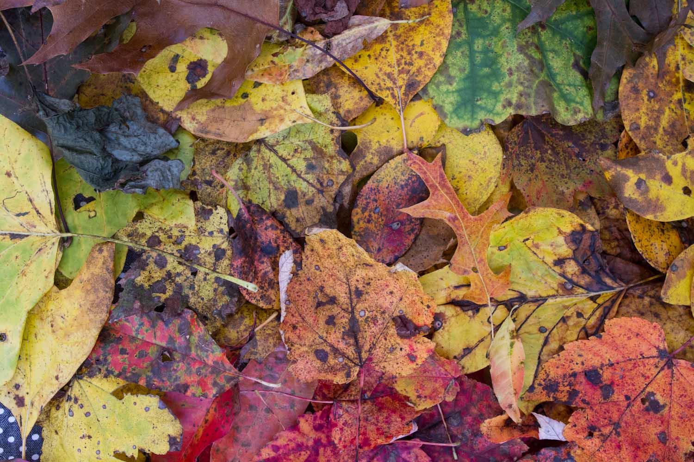 fall color-7969.jpg