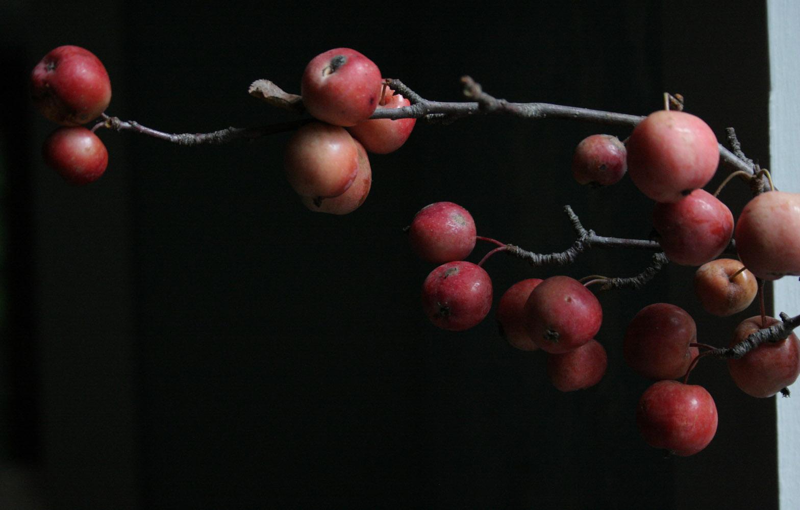 fall beauties-1792.jpg