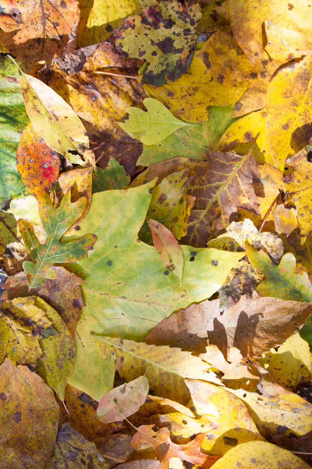 yellows_colors_forest-7924.jpg